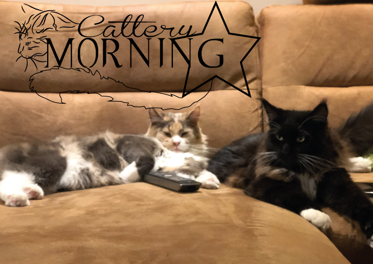 Cattery Morningstar Sciroo's Vegas & Jadzia Dax